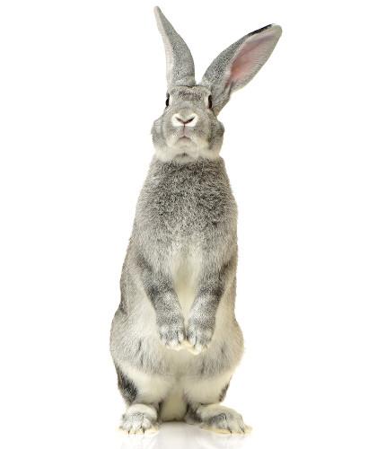 Teleco apresenta-se como coelho para o narrador, mas não é possível saber qual é a sua verdadeira identidade.
