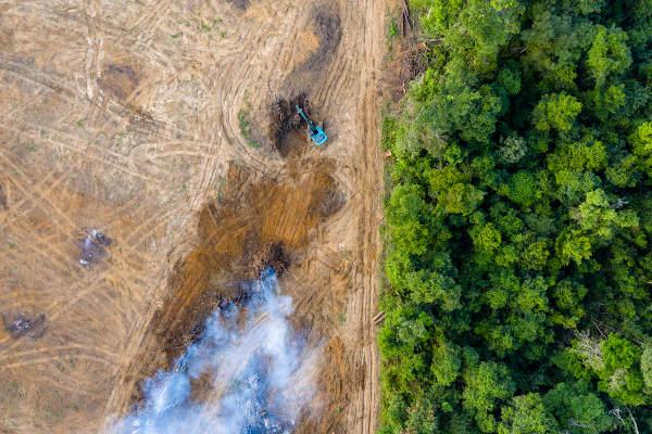 O desmatamento é responsável pela destruição do habitat de várias espécies.