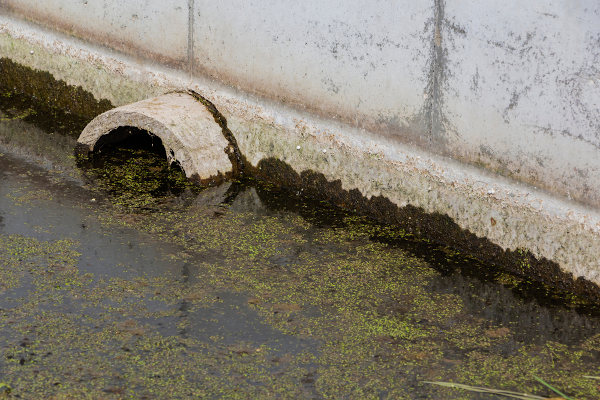 O lançamento de esgoto pode desencadear o processo de eutrofização.