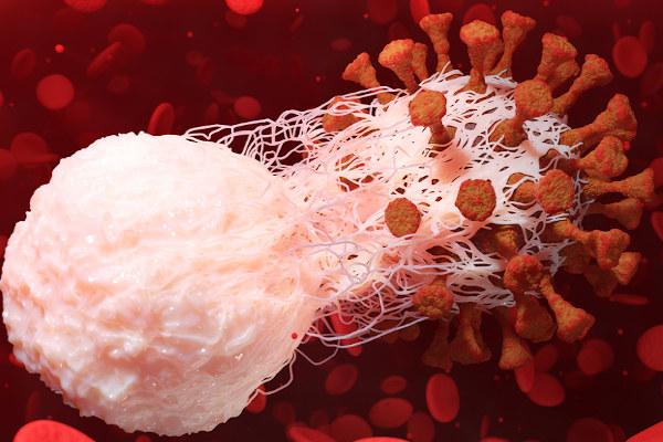 A fagocitose é um dos mecanismos que garantem nossa imunidade.