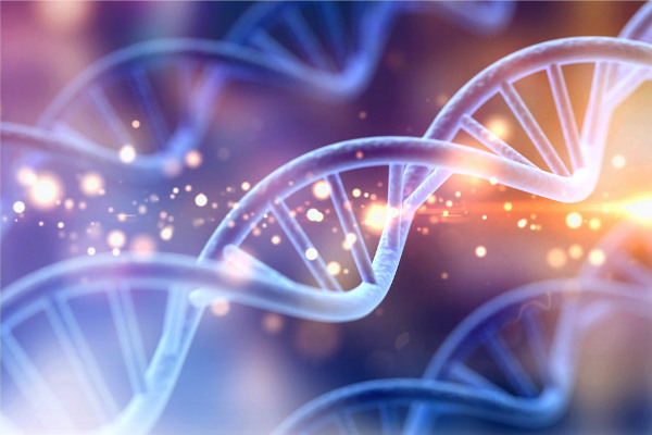 A diversidade de alelos dos indivíduos da mesma espécie é o que chamamos de variabilidade genética.