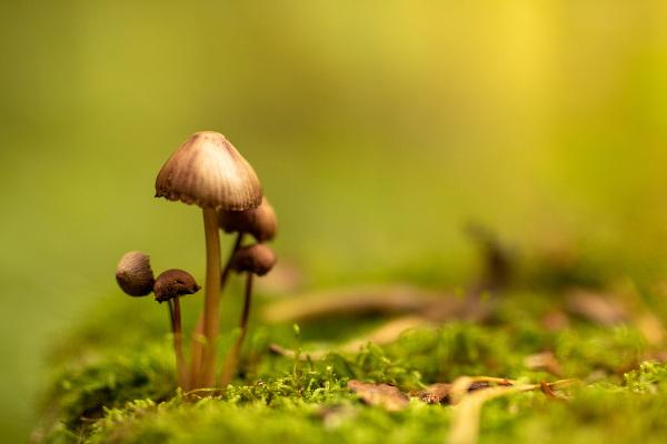Os fungos foram, por muito tempo, confundidos com plantas. Entretanto, eles são organismos heterotróficos.