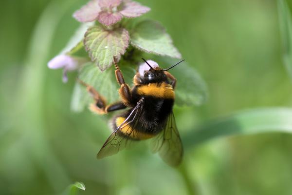 Muitos insetos apresentam importância econômica, como as abelhas.