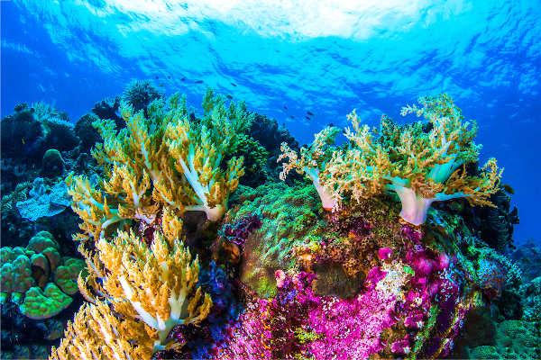 Os corais são representantes do filo Cnidaria e responsáveis pela formação dos recifes de corais, um ecossistema muito rico.
