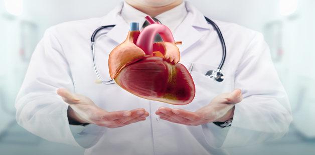 Médico segura coração