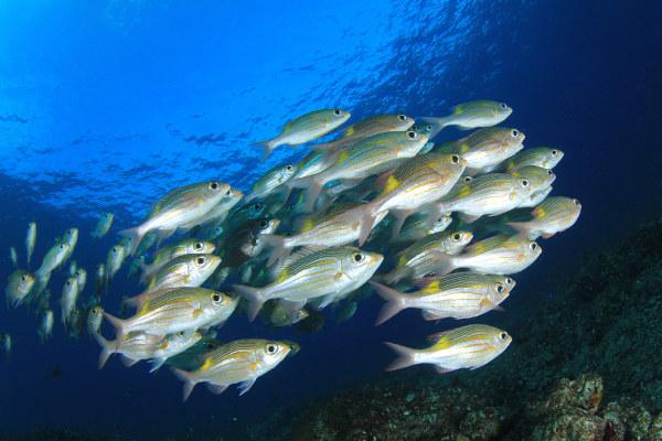 Os peixes são animais que apresentam grande variedade de formas, tamanhos e cores.