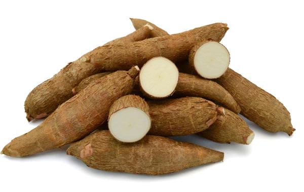 A raiz da mandioca é a parte mais utilizada da planta, sendo essa porção rica em amido.
