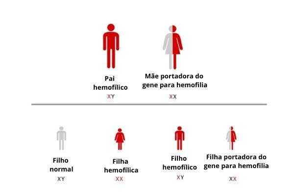 Observe uma situação em que o pai é hemofílico e a mãe é portadora do gene para a hemofilia.