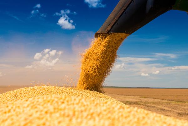 O avanço da fronteira agrícola transformou a soja na principal lavoura agrícola de Rondônia.