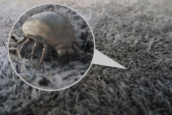 Os ácaros podem se acumular em cortinas, tapetes, colchões e travesseiros, provocando alergias.