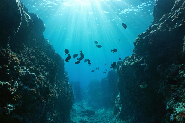 Imagem de uma fossa oceânica com alguns peixes