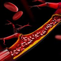 vasos sanguíneos e sangue