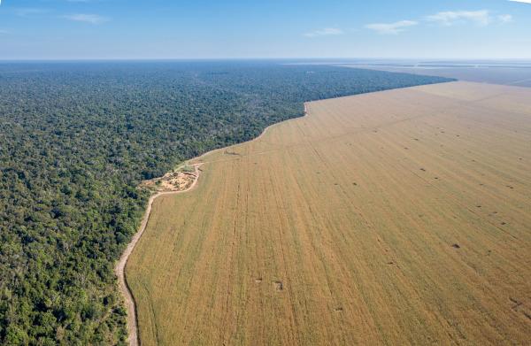 Lavoura de soja nas proximidades do Parque do Xingu, na região Norte do Brasil.