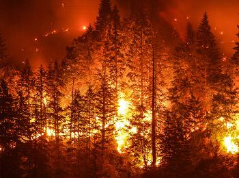 Floresta em chamas