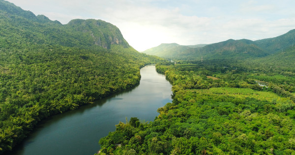 Imagem de uma floresta tropical.
