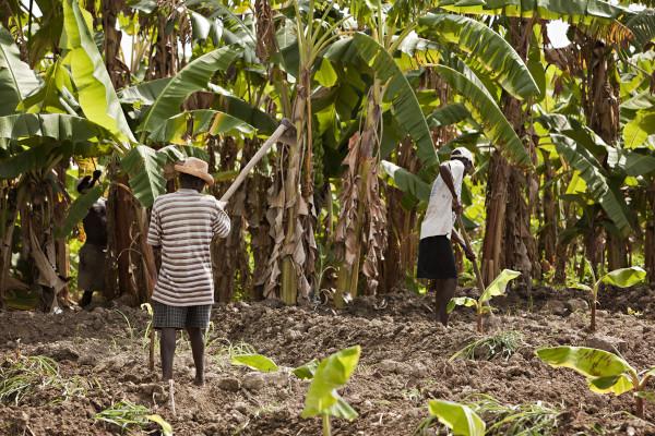 Imagem de trabalhadores rurais do Haiti.