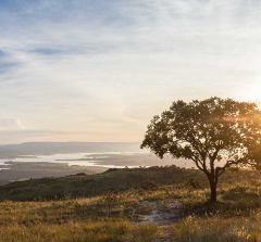 Ameaças a biodiversidade do Cerrado