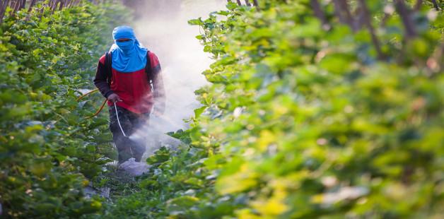 Contaminação por agrotóxicos