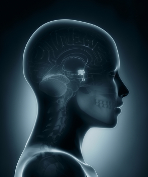 A hipófise, denominada de glândula mestra por muitos autores, é um exemplo de glândula endócrina