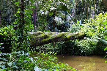 A flora brasileira é bastante diversa e apresenta várias espécies endêmicas
