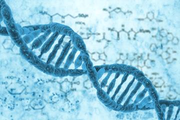Através da análise do DNA mitocondrial de Naia, foi possível observar a sua relação com os ameríndios