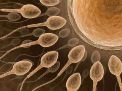 União do gameta masculino com o feminino: evento típico da reprodução sexuada.
