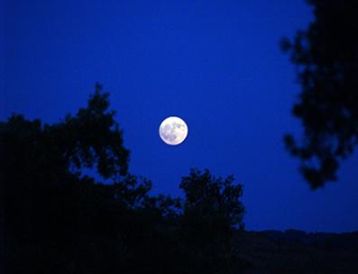 As árvores apresentam um tamanho maior do que a Lua pelo fato de estarem mais próximas de nós