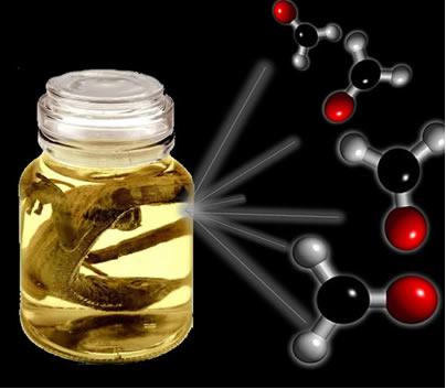 O formol, usado na conservação de espécies biológicas, é um aldeído que recebe a nomenclatura oficial de metanal