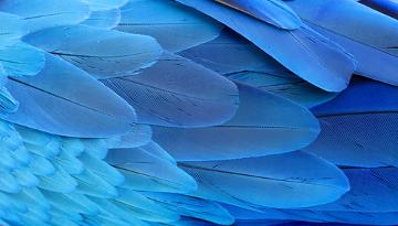 As penas são estruturas das aves relacionadas com o voo