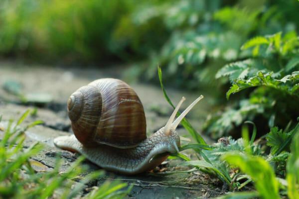 Os invertebrados são animais que não apresentam coluna vertebral e crânio.