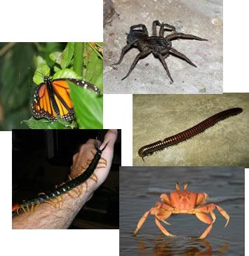 Os artrópodes formam um dos mais numerosos e diversificados grupos de animais