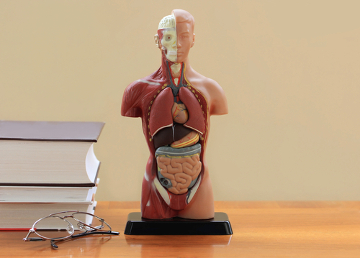 A anatomia humana é complexa, o que muitas vezes dificulta o entendimento do conteúdo