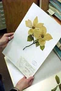 A Botânica é a ciência que estuda as plantas