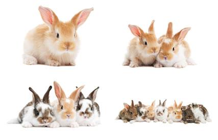 A cor da pelagem dos coelhos é um exemplo clássico de poliaelia