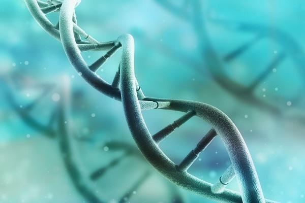 Para compreender melhor a Genética, entender alguns termos é essencial