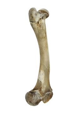 O cálcio garante resistência ao osso