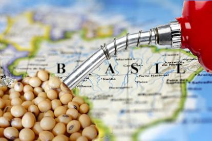 O biodisel no Brasil possui grande potencial de produção e consumo