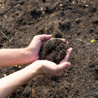 O solo é considerado um organismo vivo