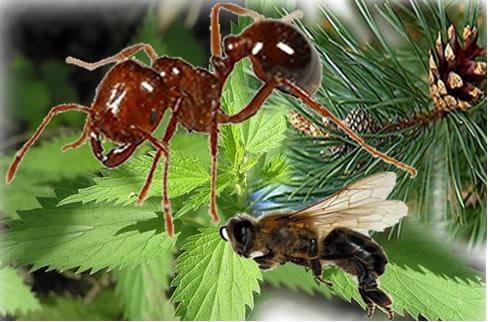 O ácido fórmico é encontrado nas formigas vermelhas, em abelhas, urtigas e pinheiros