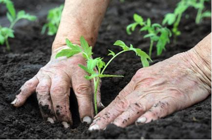 A agricultura familiar e o rodízio de culturas são formas de agriculturas aliadas ao desenvolvimento sustentável
