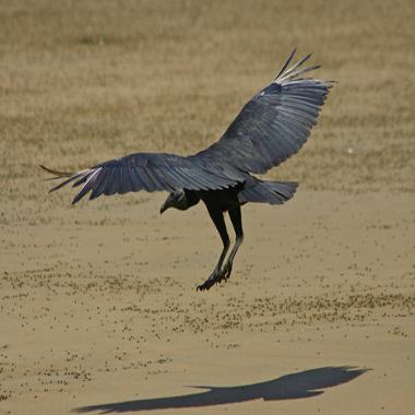 Aterrissar ou aterrizar: uma dúvida verbal
