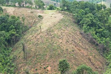 O desmatamento gera, entre outras questões, a perda de biodiversidade e hábitat de muitas espécies