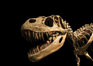 Através dos fósseis dos dinossauros, é possível estimar a era geológica que eles surgiram