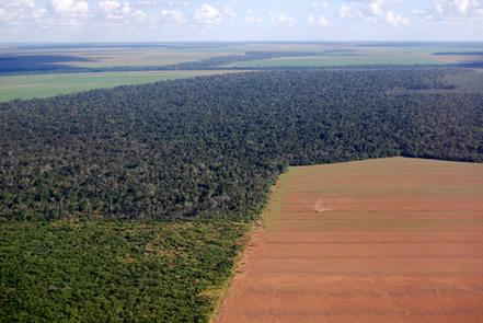 Destruição da maior floresta tropical do mundo