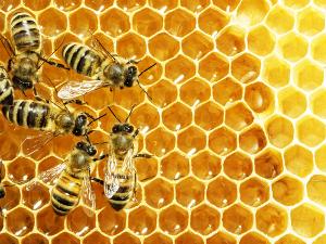 A sociedade das abelhas faz parte das relações intraespecíficas harmônicas