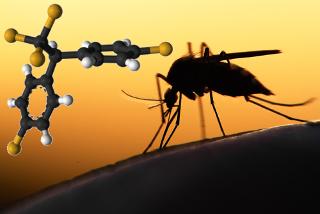 O DDT é o principal organoclorado usado como inseticida