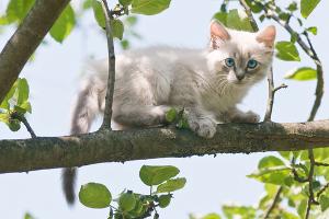 Você já percebeu que os Gatos sempre caem de pé?