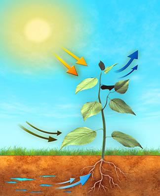 Como ocorre a nutrição das plantas é um assunto que já vem sendo estudado há muitos anos