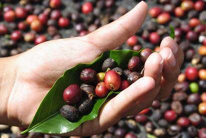 A primeira vez que ocorreu no Brasil algum tipo de acumulação primitiva de capitais foi no Ciclo do Café