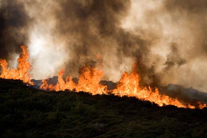 As queimadas provocadas pelo homem contribuem para a extinção do cerrado